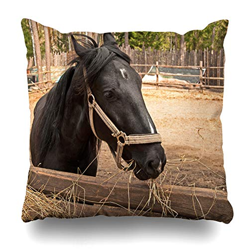 Ahawoso Throw Pillow Cover Tree Brown Black Horse Nature Green Closeup Countryside Day Domestic Dry Design Forest Home Decor Pillow Case Square Size 20x20 Inches Zippered Pillowcase