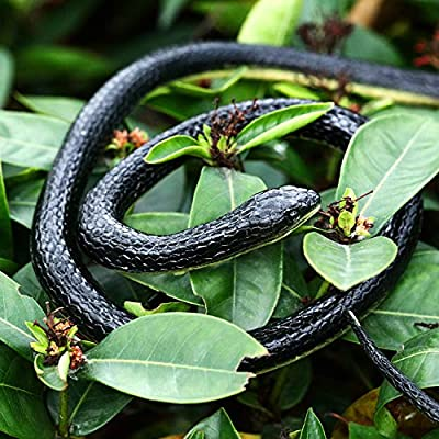 2 Pieces Large Rubber Snakes in 2 Sizes 51 Inches and 47 Inches, Fake Snake Black Mamba Snake Toys to Keep Birds Away, Halloween Decoration (2 Pieces, 51 Inch, 47 Inch): Toys & Games