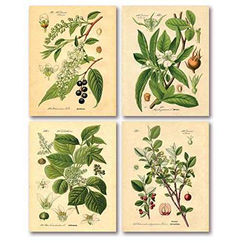 Gango Home Decor Popular Old-Fashioned Plant Botanical Prints; Four 8x10in Poster Prints ()