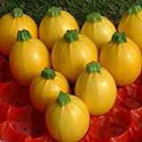 buy Courgette - Floridor F1 - 15 Seeds now, new 2018-2017 bestseller, review and Photo, best price $4.97