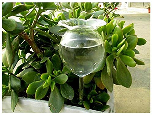 EOEO Self Watering Aqua Globes Hand-blown Mini Glass Automatic Plant Waterer Bulbs Flower Decorative Design,Set of 2pcs