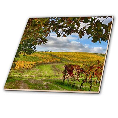 3dRose Danita Delimont - Tuscany - Italy, Tuscany. Autumn Vineyards near Montepulciano. - 6 Inch Ceramic Tile - Tile Porcelain Tuscany