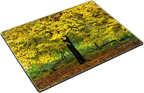 MSD Place Mat Non-Slip Natural Rubber Desk Pads design 30876561 linden yellow foliage in the park autumn (Linden 12 Piece)