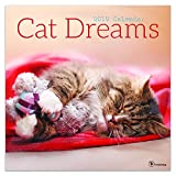 2019 Wall Calendar - 2019 Cat Dreams Calendar, 12x12 Inch Monthly Calendar, Pets and Animals Theme, with 4-Month 2020 Bonus Spread