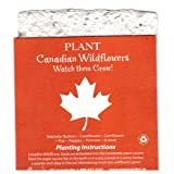 Maple Leaf Gift Singles pack of 4