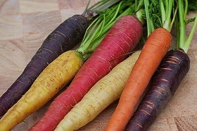 Bulk Rainbow Blend Carrot Seed* 1000 Seeds Bulk Medicinal*healthful*antioxidant
