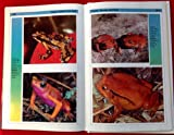Fantastic Frogs, Jerry G. Walls, 0793801311