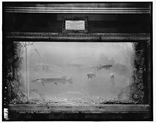 Vintography 8 x 10 Ready to Frame Pro Photo of in The Aquarium 1908 Detriot Publishing 62a