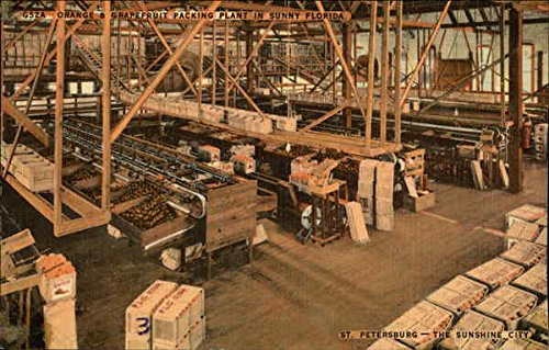 Orange and Grapefruit Packing Plant in The Sunshine City St. Petersburg, Florida Original Vintage Postcard