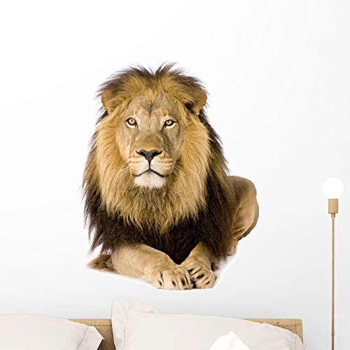 Cheap  Wallmonkeys Male Lion Wall Decal Peel and Stick Graphic (24 in H..