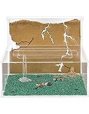 AntHouse - Formicaio Naturale di Sabbia - Kit L (Sandwich + Cassa di Foraggiamento) (Formiche Incluse con Regina)