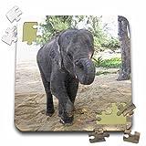 Angelique Cajams Safari Elephants - Thailand Elephant - 10x10 Inch Puzzle (pzl_26798_2)