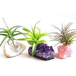 3 Pcs Tillandsia Air Plant Crystals Kit/Lot Includes Amethyst Cluster, Rose Quartz, and Crystal Geode/Terrarium Fairy Garden Stones + Kraft Gift Box