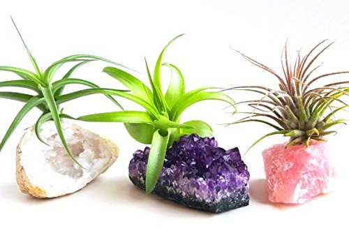 3 Pcs Tillandsia Air Plant Crystals Kit/Lot Includes for sale  Delivered anywhere in USA