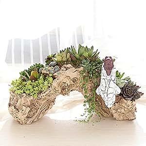 loveezbuy Creative flores macetas diseño de raíz para plantas suculentas/Cactus