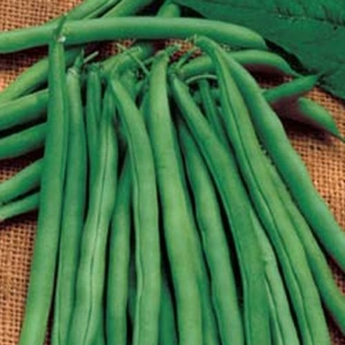 Green Bean 30 Seeds (Snap Bean) - Bush B - Blue Lake 274 Bean Snap Shopping Results
