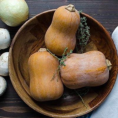 25_Seeds 15 Organic HONEYNUT Mini Butternut Squash (CDK) Seeds : Garden & Outdoor