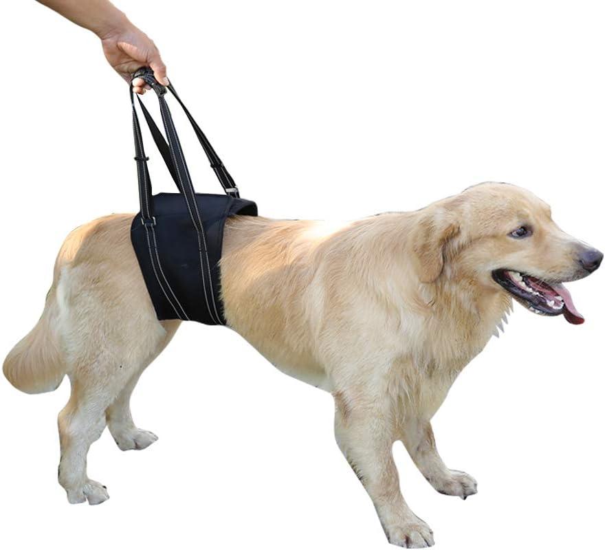canine acl brace