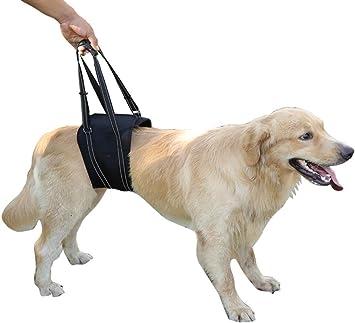 dog brace for cruciate ligament tear
