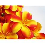 100-Yellow-Red-Hawaiian-Plumeria-Frangipani-Silk-Flower-Heads-3-Artificial-Flowers-Head-Fabric-Floral-Supplies-Wholesale-Lot-for-Wedding-Flowers-Accessories-Make-Bridal-Hair-Clips-Headbands-Dress