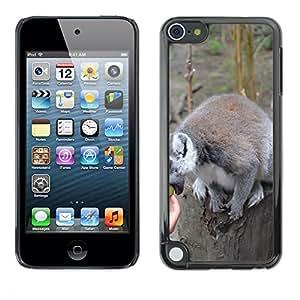 Etui Housse Coque de Protection Cover Rigide pour // M00130207 Anillo de cola Lemur lémures Tropical // Apple ipod Touch 5 5G 5th