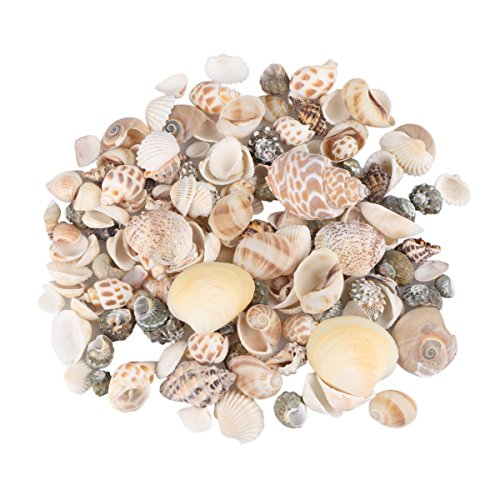 Aunifun 80PCS Sea Shells Mixed Beach Seashells, Colorful Natural Seashells Perfect Accents for Candle Making,Home Decorations, Beach Theme Party Wedding Decor, DIY Crafts, Fish Tank and Vase -