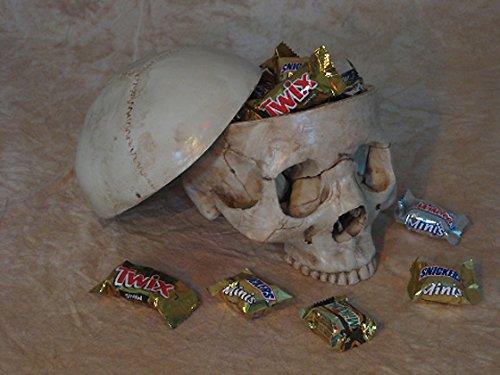 Skull Candy Dish ()