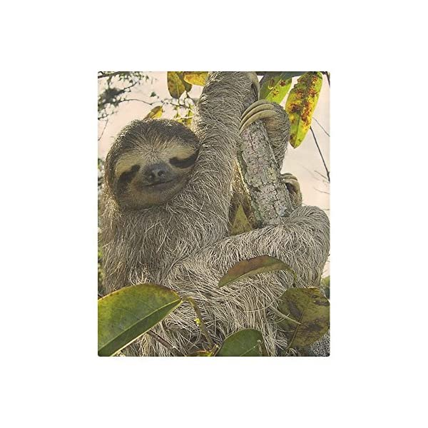 Customize Brushed Fabric Awesome Animal-Sloth Fashion Duvet Cover 86&Quot; X 70&Quot;(One Side Printed) Ad-1057 -