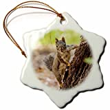 Ornaments to Paint Danita Delimont - Animals - Eastern Sierra Nevada. An inquisitive Douglas Squirrel or Chickaree. -