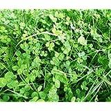 Bobby-Seeds Bodenkursamen Erstgrün Schnellgrüner 500 Gramm
