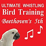 Ultimate Whistling Bird Training - Beethoven's 5th