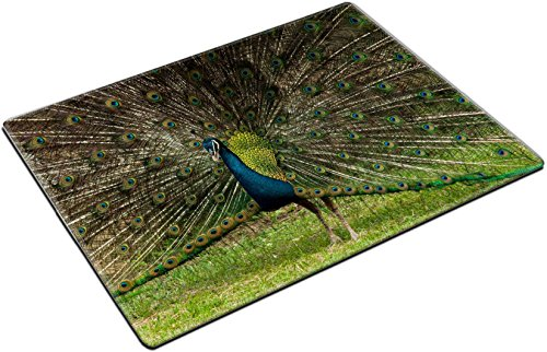 MSD Place Mat Non-Slip Natural Rubber Desk Pads design 19621836 green beautiful (136 Peacock)