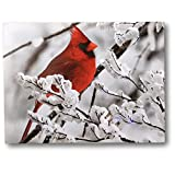 cardinal bird pictures - Cardinal Canvas Print - Red Cardinal on a Snowy Branch - LED Lighted Print with 40 Fiber Optic Lights in The Branches - Winter Scene Christmas Pictures