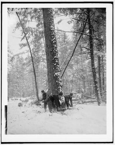 Logging,felling tree,lumber industry,snow,woodcutting,logs,Michigan,MI,1880 Photo