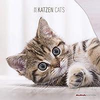 Katzen 2020 - Cats - Wandkalender - Broschürenkalender (30 x 60 geöffnet) - Tierkalender - Wandplaner