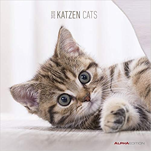 Katzen 2020 Broschürenkalender