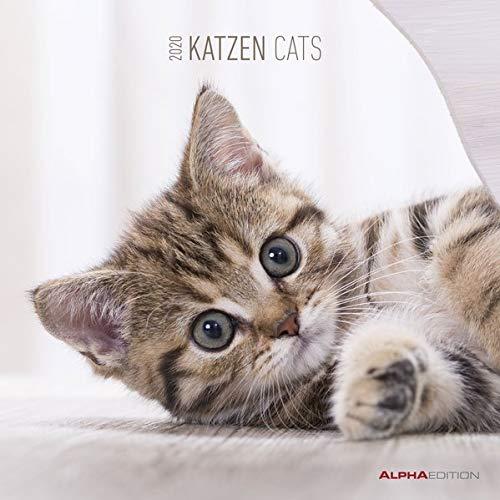 Katzen 2020   Cats   Wandkalender   Broschürenkalender  30 X 60 Geöffnet    Tierkalender   Wandplaner