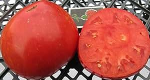 Bistec de tomate rojo Semillas Sakharnyy Pudovichok ucraniano de la herencia no GMO