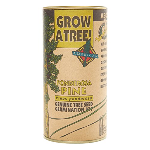 Ponderosa Pine | Tree Seed Grow Kit | The Jonsteen Company