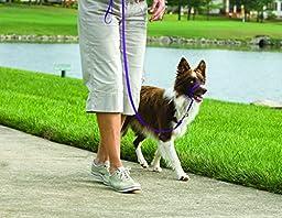 PetSafe Gentle Leader Head Collar with Training DVD, MEDIUM 25-60 LBS., DEEP PURPLE