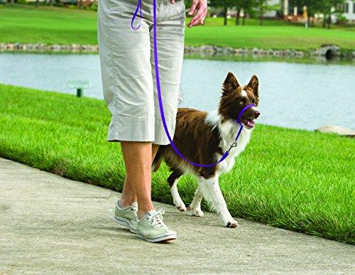 PetSafe Gentle Leader Head Collar with Training DVD, MEDIUM 25-60 LBS., DEEP PURPLE by PetSafe (Image #4)