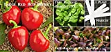 Large Red Hot Cherry Pepper Seeds 320 Seeds Upc 646263361238 + 1 Plant Marker