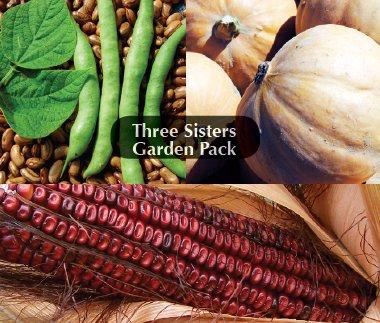 corn beans and squash - 3