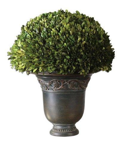 Globe Boxwood Preserved Uttermost (Uttermost 60092 Globe Preserved Boxwood)
