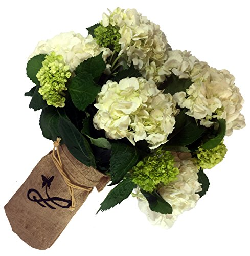 HandWrapped Hydrangea Bouquet by by Plaza Florist - Fresh Flowers Hand Delivered in Philadelphia ()