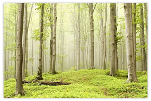 Picture Sensations Glow in The Dark Canvas Wall Art, Misty Spring Forest by Picture Sensations