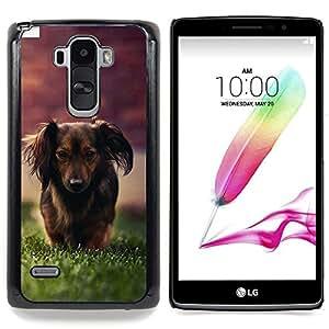 """Qstar Arte & diseño plástico duro Fundas Cover Cubre Hard Case Cover para LG G4 Stylus H631 MS631 H635 H540 H630D H542 (Dachshund Little Brown perro de pelo largo Hierba"""")"""