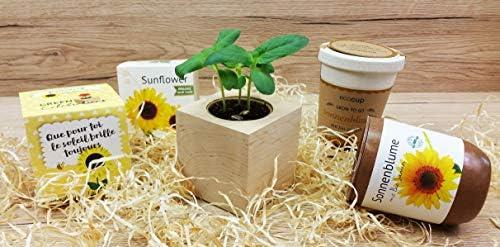 Feel Green Ecocube - Flor de Sol ecológica, Certificado ecológico ...