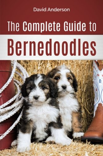 The Complete Guide to Bernedoodles: Everything you need to know to successfully raise your Bernedoodle puppy! ()