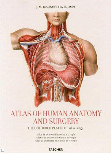 Descargar Libro Atlas Anatomy. Ediz. Multilingue Jean M. Le Minor